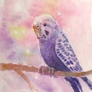 ACEO Original Painting Parakeet parrot art NEW